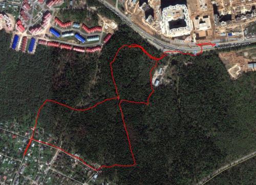 Тропинки в лесу.JPG