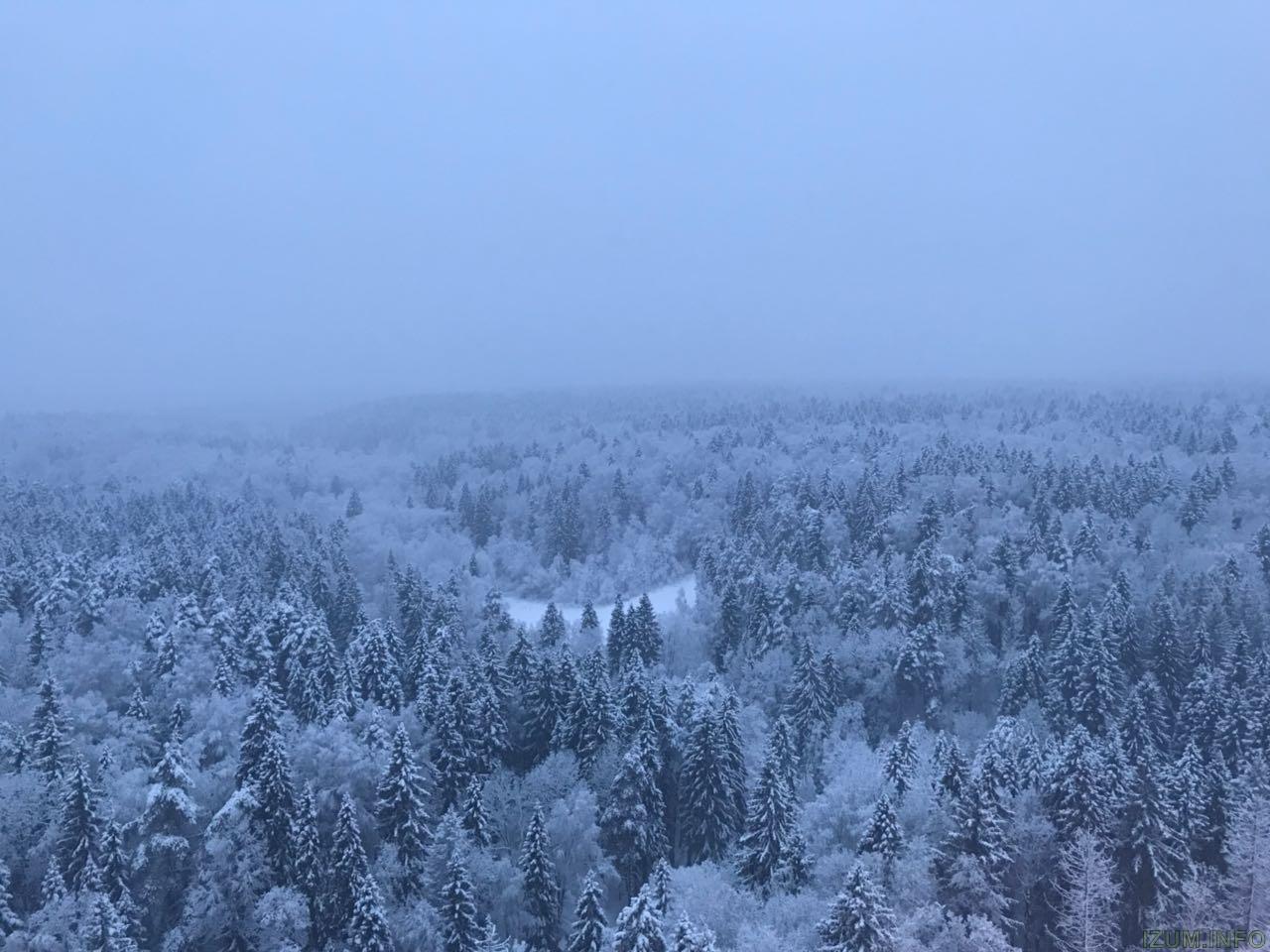 Лес 4.jpg