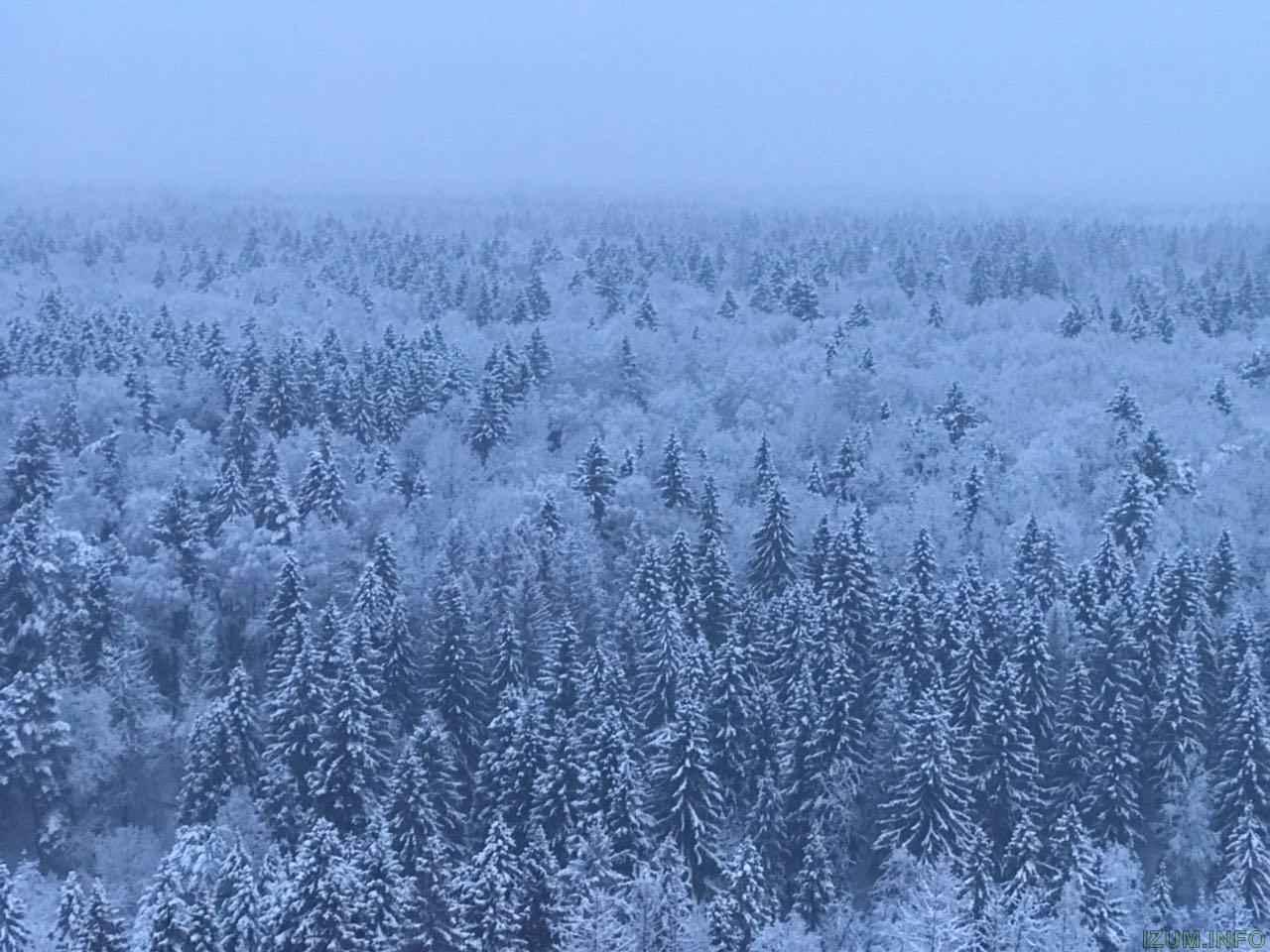 Лес 2.jpg
