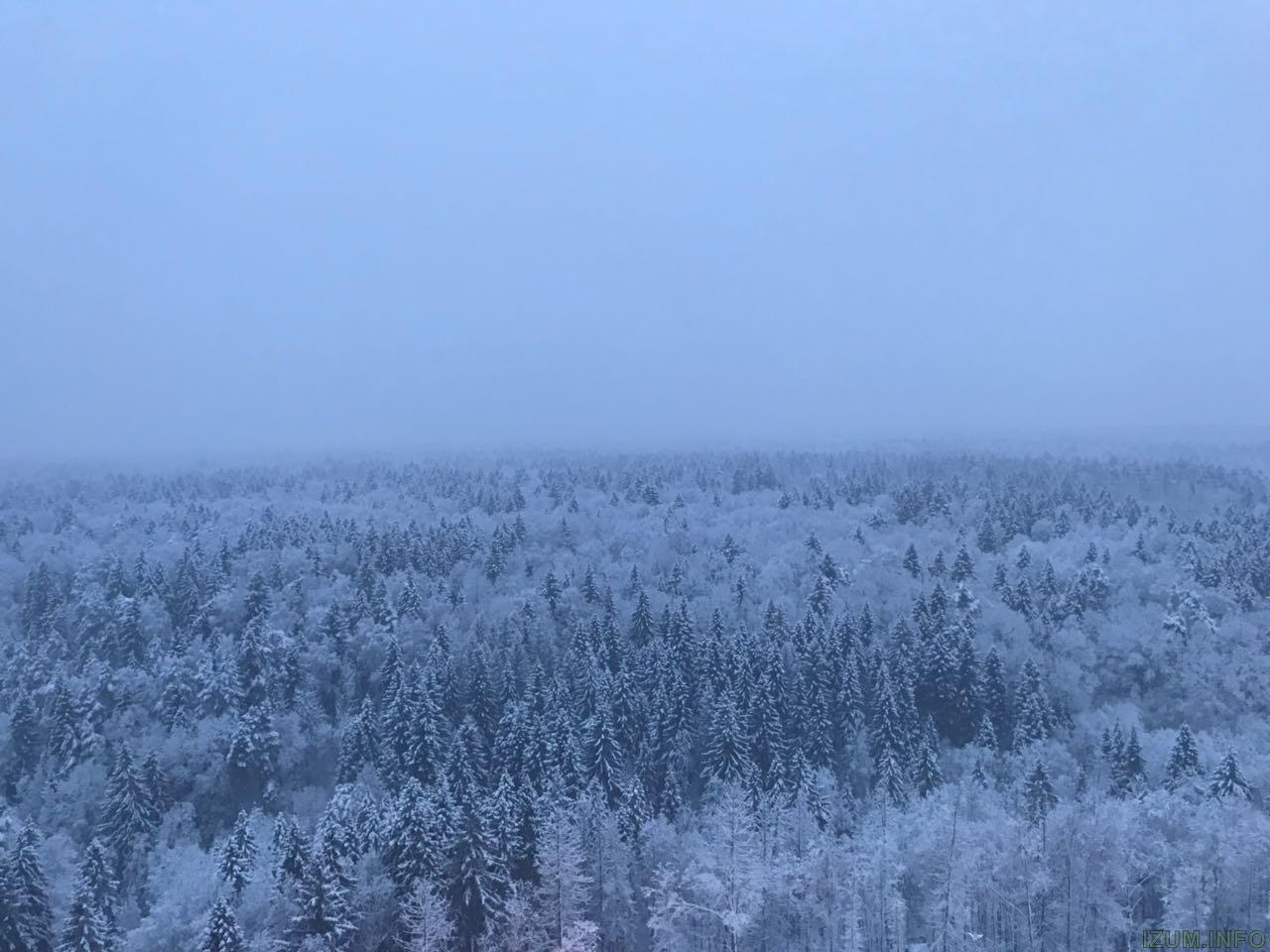 Лес 1.jpg