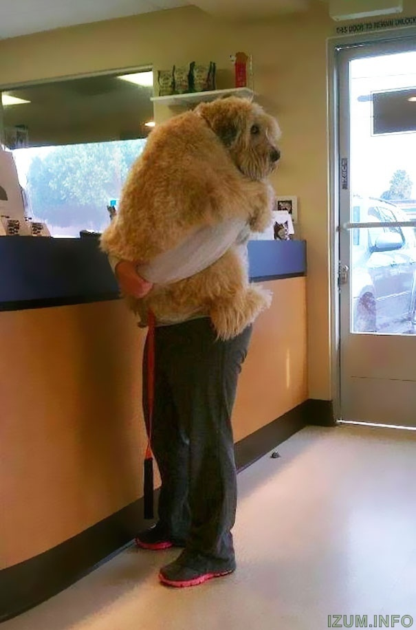cute-dogs-hugging-humans-11.jpg
