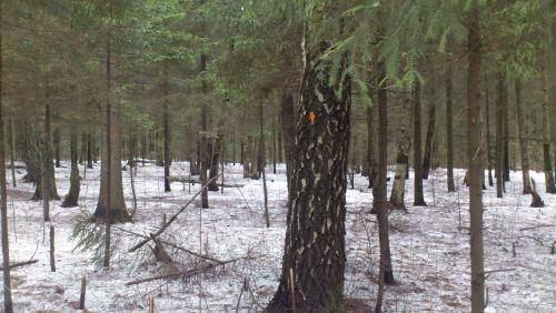 лес1.jpg