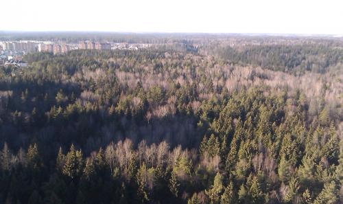 вид на лес.JPG