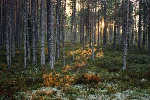 В лесу Карелия.JPG