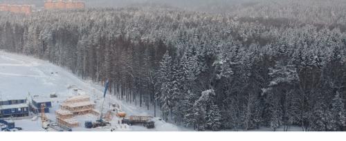 лес зимой.png